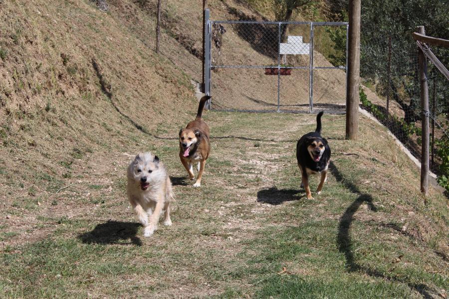 Il canile rifugio Cino Sport